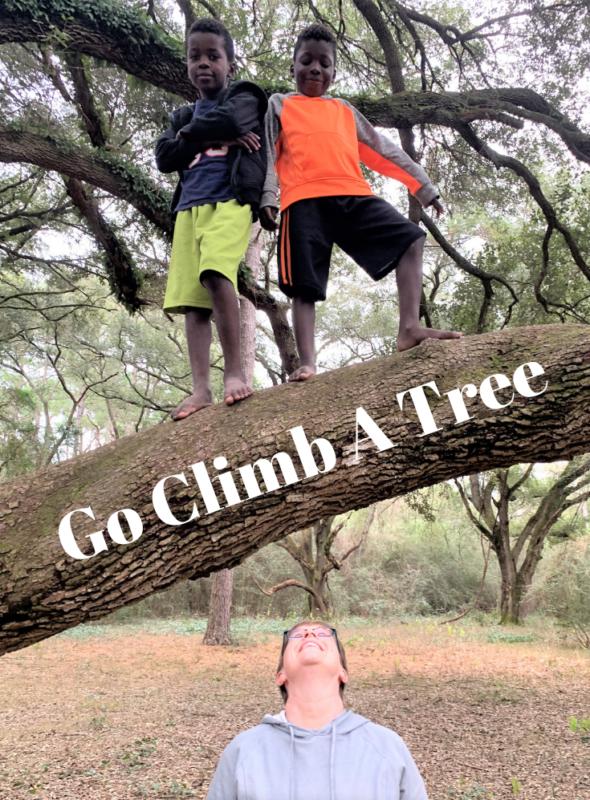 Go Climb A Tree