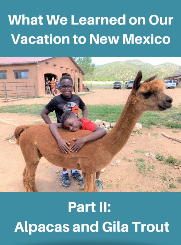 What we Learned on Our Vacation to New Mexico Part II: Alpacas, and Gila Trout