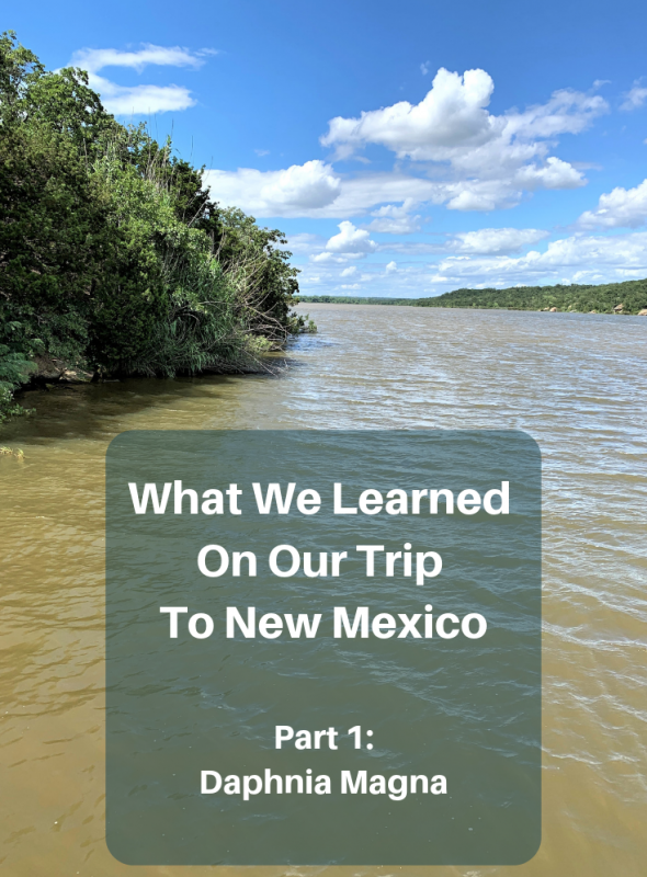 What We Learned on Our Trip to New Mexico. Part 1: Daphnia Magna